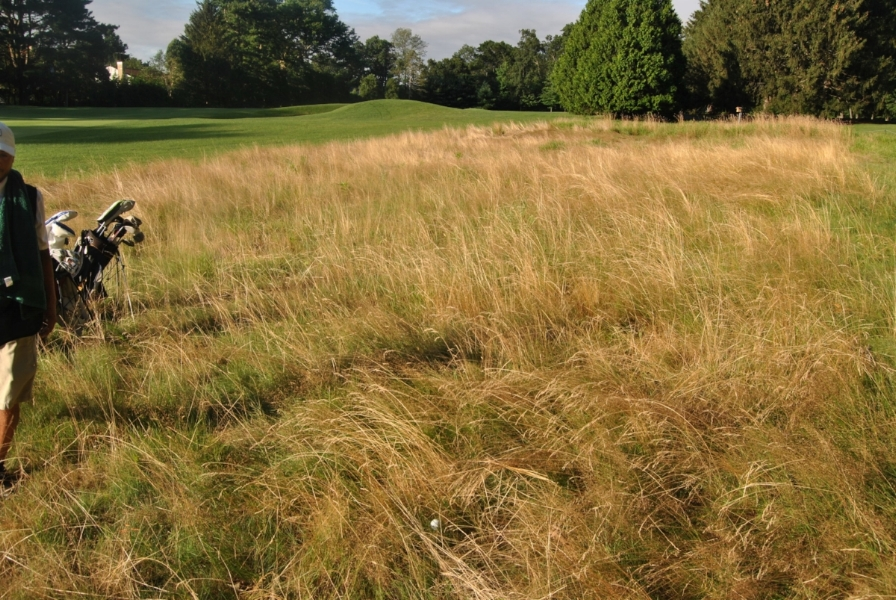My drive on the second hole ended up in the fescue on the right.