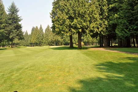 I hit my 2nd shot on the sixth hole into the fairway and the tree on the right blocks the approach to the green.