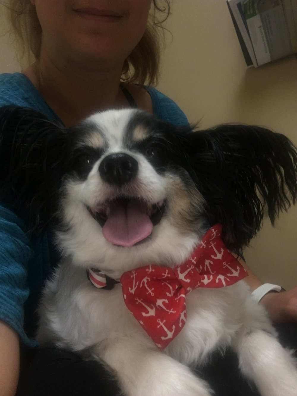 All smiles at the vet - nothing keeps this dog from his adoring public.