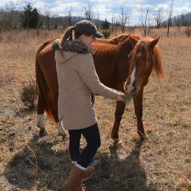 A few more from Monday, taking salt blocks and hay to the free roaming horses in Eastern Kentucky.  #horsegirl