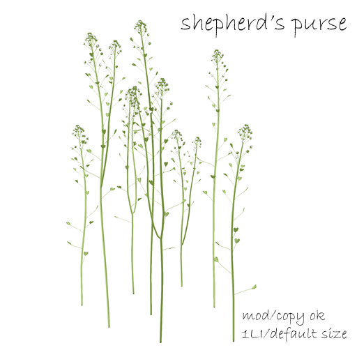 shepherdGÇÖs purse Rez AD.jpg