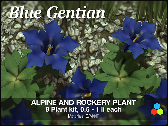 CR Gentiana Plants