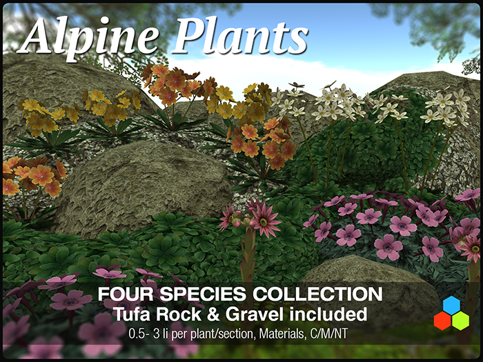 CR Alpine Plants