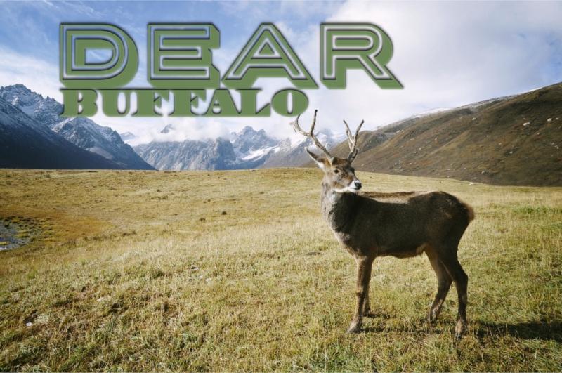 dear buffalo.jpg