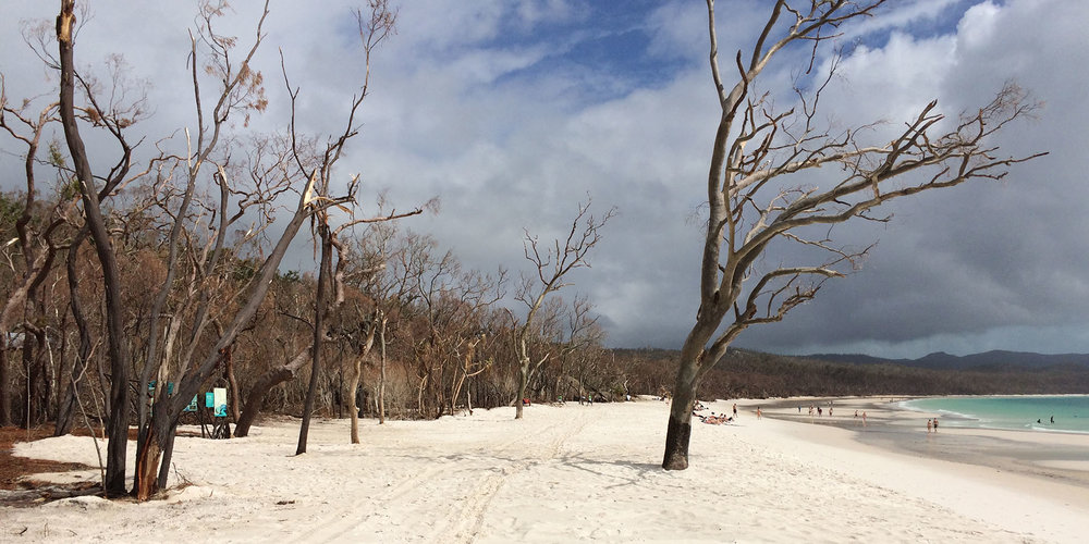 Whitehaven Beach in Whitsunday Island National Park after the Cyclone Debbie clean-up effort.