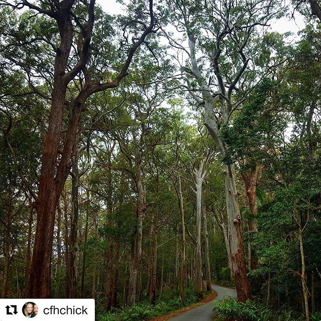 The road to Knoll Lookout in Tamborine National Park, Mt Tamborine. 📷 @cfhchick reposted via @nationalparksassocqld  #knolllookout #tamborinenationalpark #tamborinenp #mttamborine #mounttamborine #queenslandnationalparks #connectandprotect
