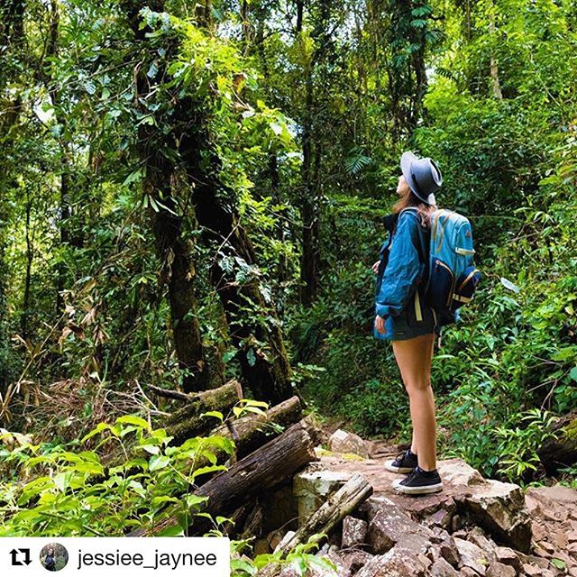 Exploring Girringun National Park near Wallaman Falls.  #girrigunnationalpark #girrigunnp #wallamanfalls #nationalparks #nationalparksqld #queenslandnationalparks #bushwalking #bushwalker #hiking #nature #naturalqueensland #connectwithnature #connectandprotect  ###  Original post: 📷 @jessiee_jaynee ・・・ If you're not lost, you're not much of an explorer.