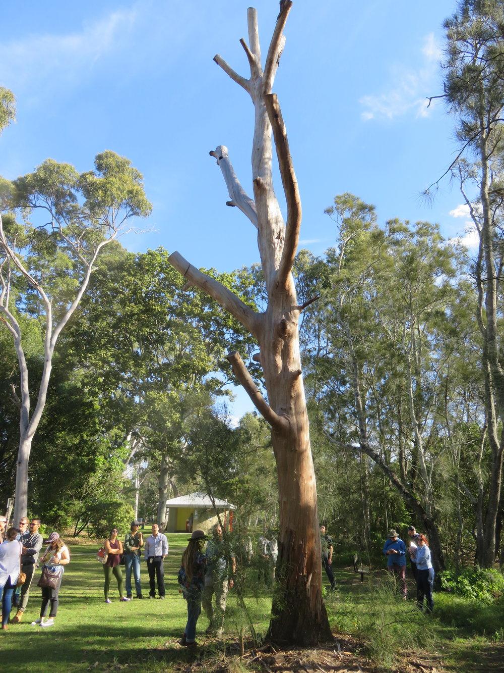 park veteran tree.JPG