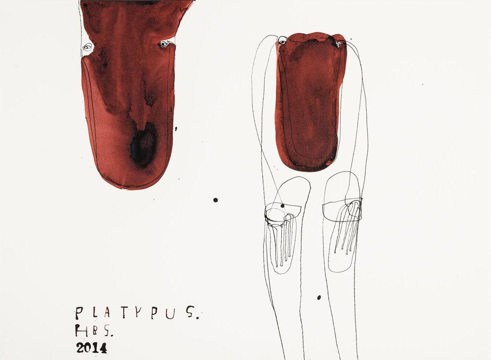 Heather B. Swann   Platypus   2016  ink on paper  56 x 76 cm