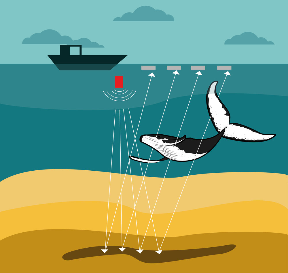 SEISMIC TESTING - What it is, what it means for marine life and what you can do to help.