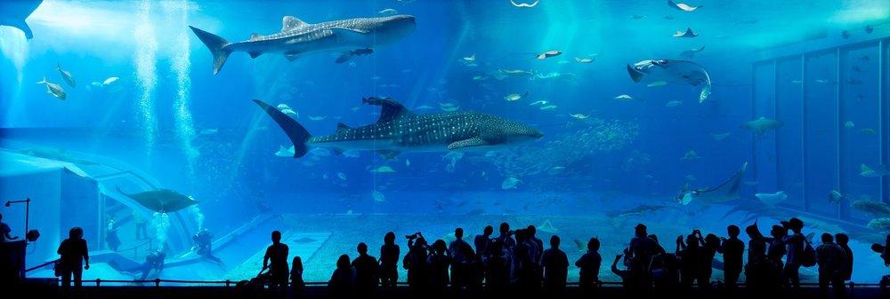 aquarium-725798_1920.jpg