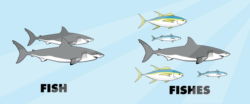 fishandfishes-03.jpg