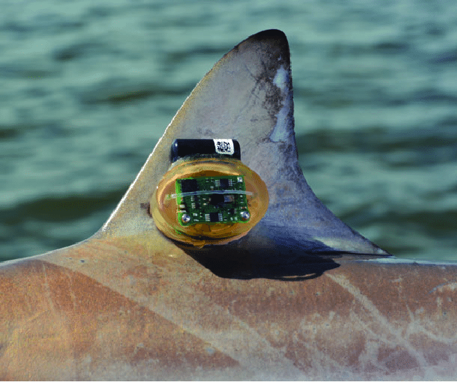 A-Cefas-G6A-accelerometer-joined-to-a-Vemco-V9-acoustic-transmitter-attached-to-the.png
