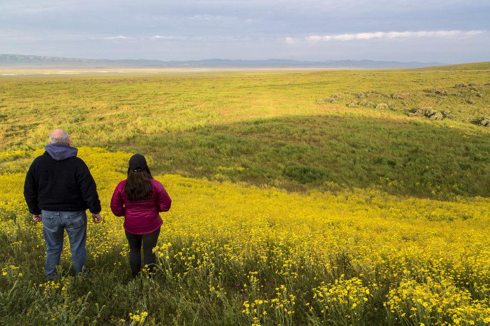 Springtime Wildflowers. © Bob Wick, BLM