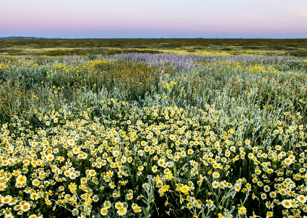 Wildflowers. © Bob Wick, BLM