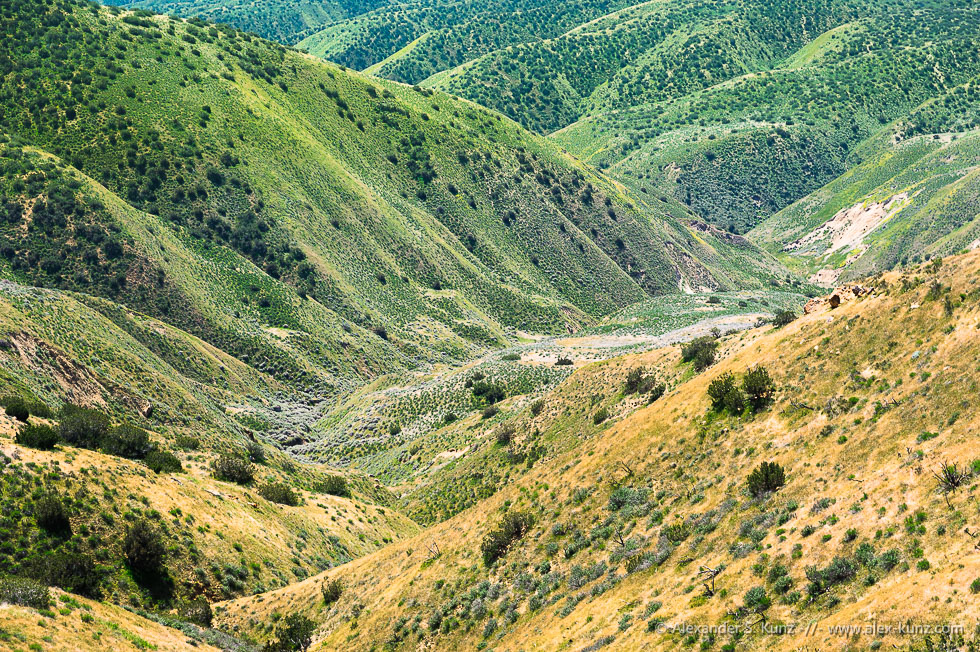 Caliente Ridge Gorge © Alexander S. Kunz