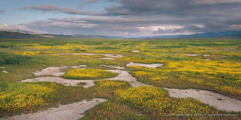 Wildflower Patchwork © Alexander S. Kunz