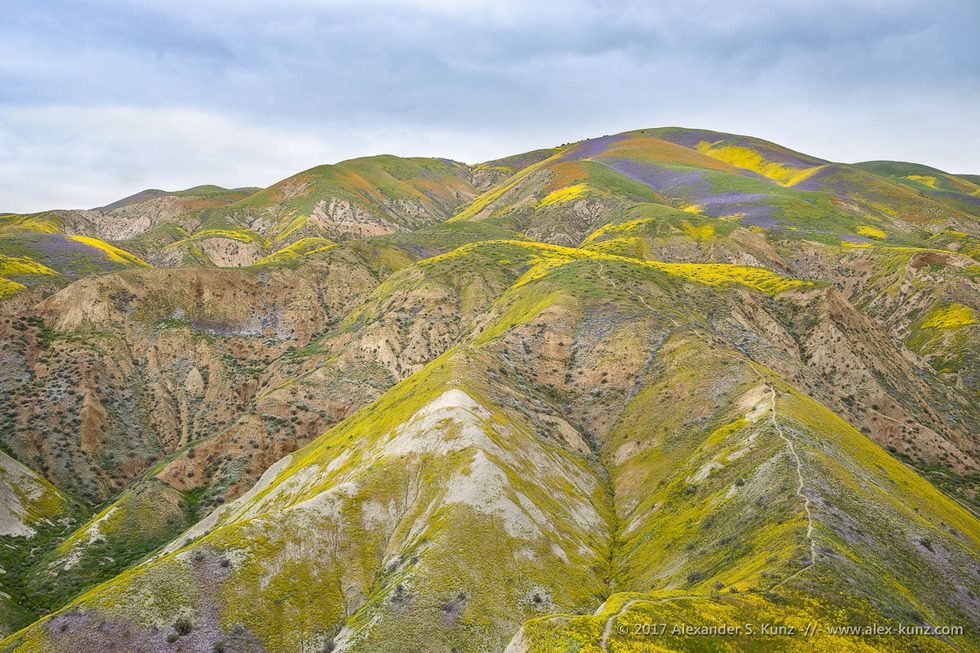 Temblor Range © Alexander S. Kunz
