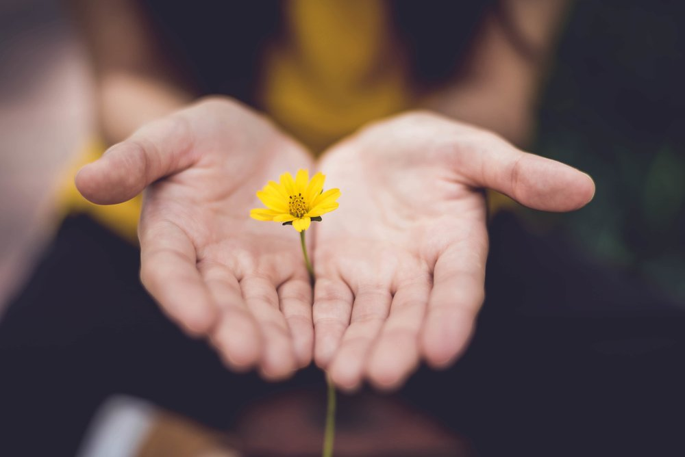 Person with hands out wholding dandelion flower.