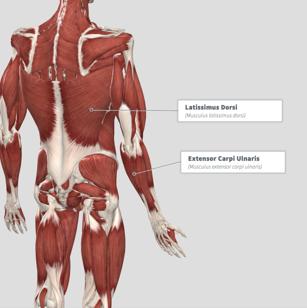 Tennis Elbow Pain — Integrated Bodies
