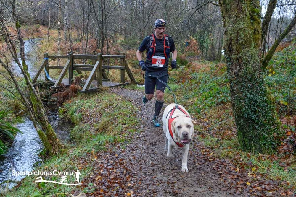 Gentleman crosses a bridge with his dog running the Cannicross Trail Race.