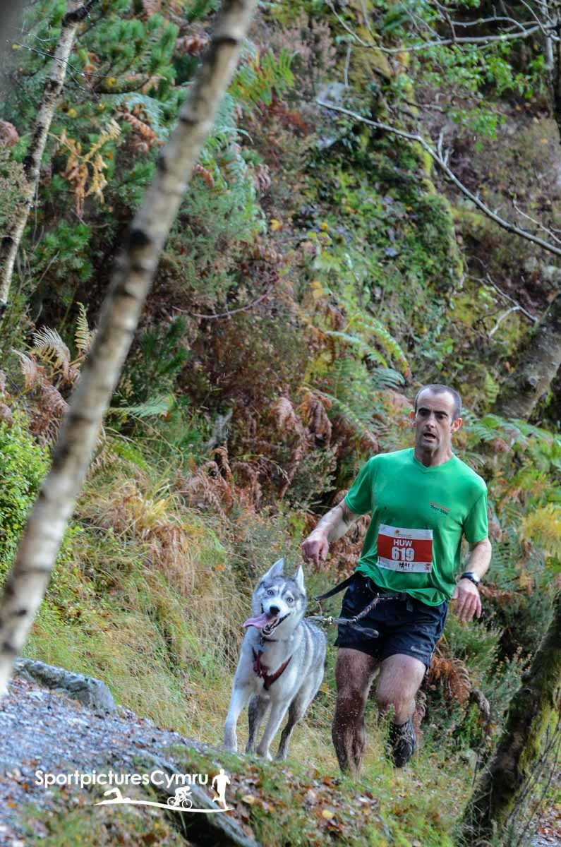 A member of the Anglesey Cannicross runs through Gwydir forest with his dog.