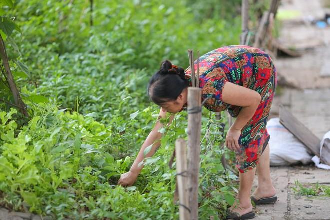 Ngày nào cô Dung cũng hai bận sáng tối đi tưới cây, chăm sóc vườn để có nguồn thức ăn sạch. (Ảnh: Minh Sơn/Vietnam+)