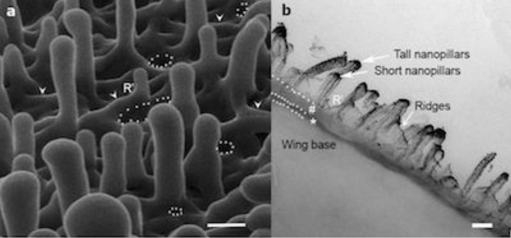Bề mặt cánh chuồn chuồn dưới kính hiển vi.