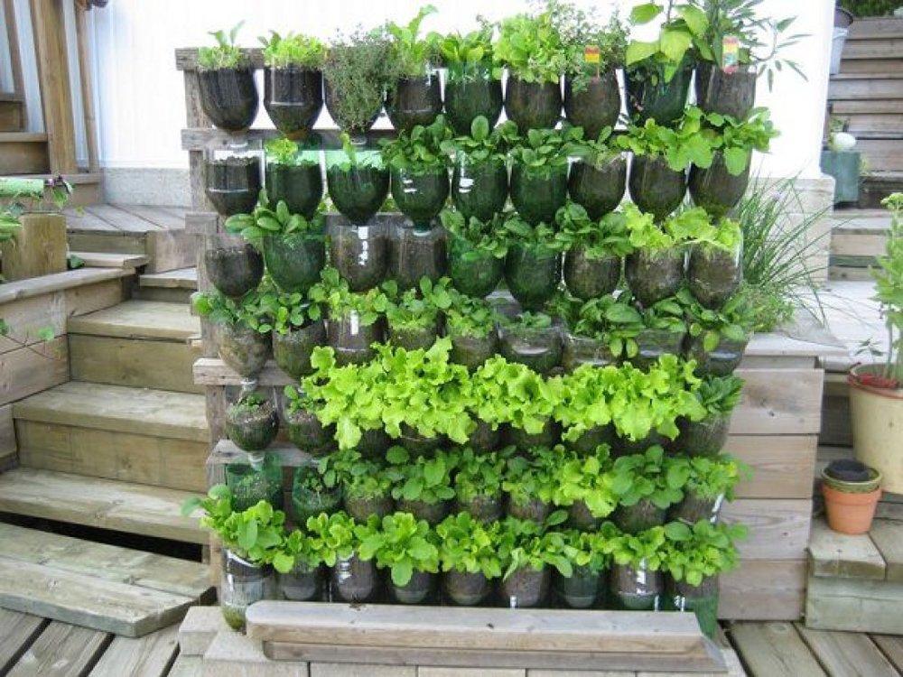 Thật đơn giản để có một góc toàn rau xanh với chai nhựa. Các loại chai dấm, chai dầu hay chai coca cỡ to sau khi uống hết, đừng vội vứt đi, bạn hãy sưu tầm lại đủ nhiều để có thể tạo một vườn treo đặc biệt trong khuôn viên nhà mình.