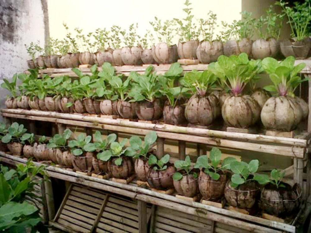 Với ý tưởng này, bạn cần chú ý hơn trong khâu chăm sóc. Đất trong túi vải tốt nhất nên cách miệng túi vài cm để tránh bị tràn đất ra ngoài và giữ vệ sinh khi tưới nước. Cuối cùng là tìm nơi phù hợp, có đủ ánh sáng để treo túi lên. Phương pháp trồng rau hiệu quả bằng túi vải có nhiều ưu điểm so với các phương pháp trồng trong thùng xốp truyền thống từ trước đến nay.