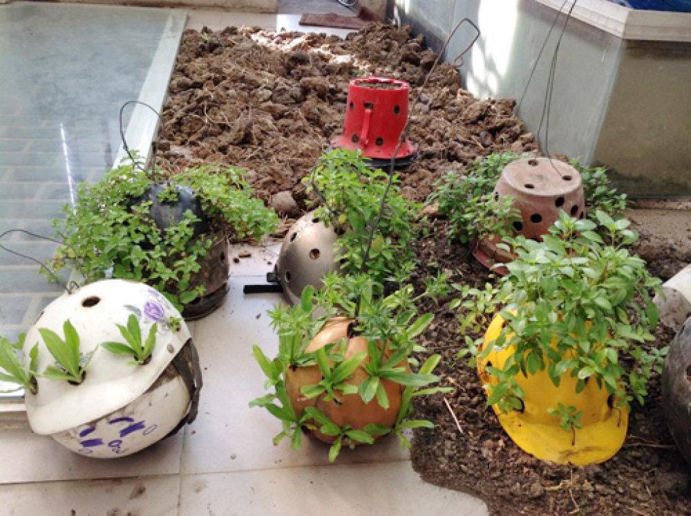 Độc lạ kiểu trồng rau thơm trong mũ bảo hiểm, mũ bảo hộ và quả bóng nhựa cũ
