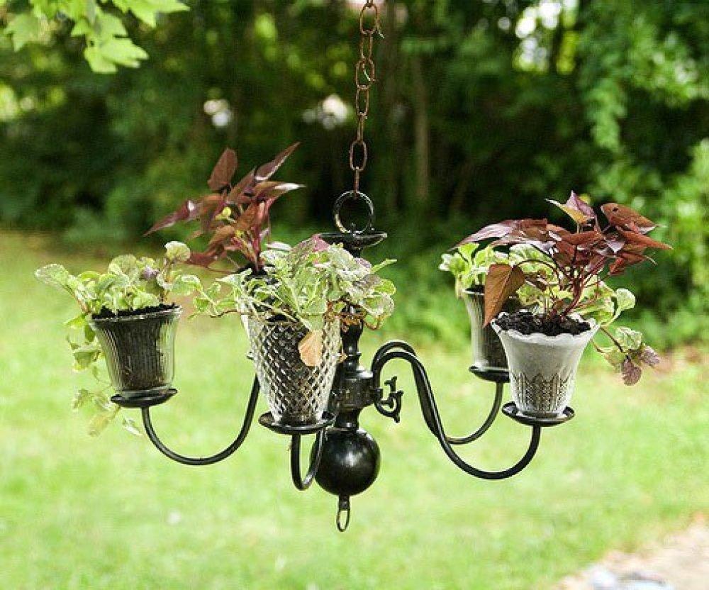Hay những chiếc đèn chùm cũ được tận dụng để trồng rau lang khá sáng tạo
