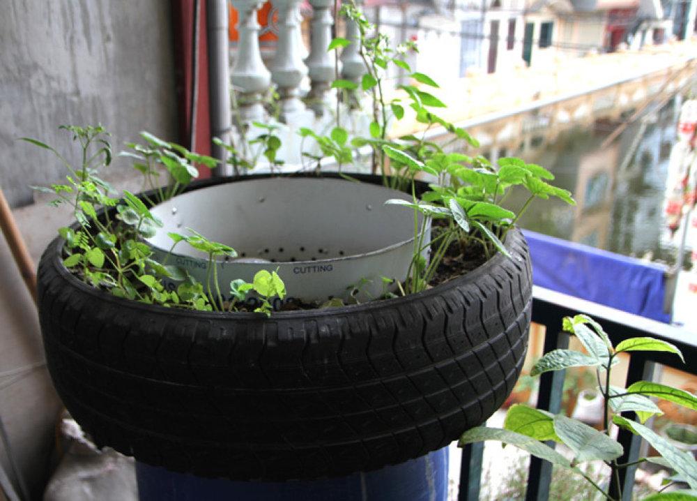 Trồng rau trong lốp xe