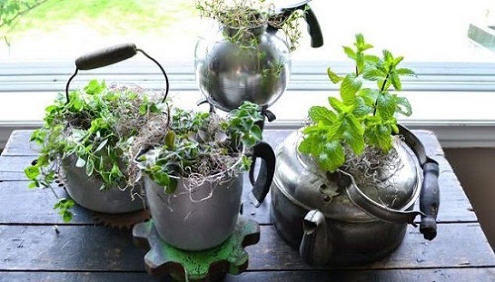 Thậm chí từ siêu, ca nhôm bạn đều có thể tái sử dụng làm nơi trồng rau