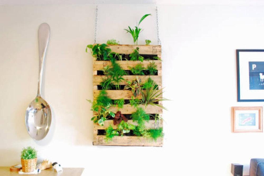 """Từ những mảnh gỗ xếp xó không dùng đến, có thể thiết kế thành một """"bức tường sống"""" trồng rau, củ và treo trong nhà bếp như thế này"""