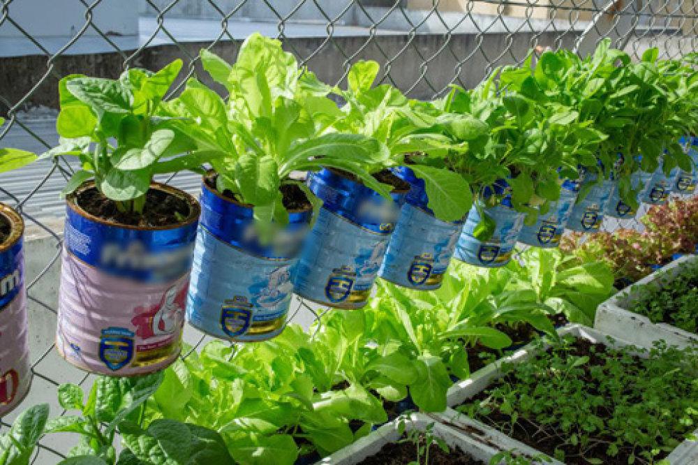 """Nếu nhà bạn có em bé và đang sử dụng sữa bột, vậy hãy lôi chúng ra để làm """"thùng trồng rau"""" xinh xắn như này"""