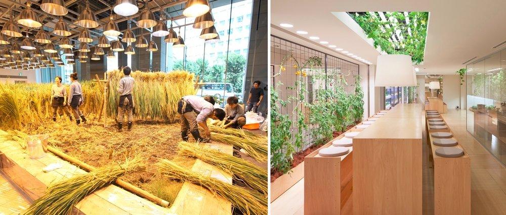 Nhật Bản: Trồng lúa và rau màu ngay giữa văn phòng công ty -