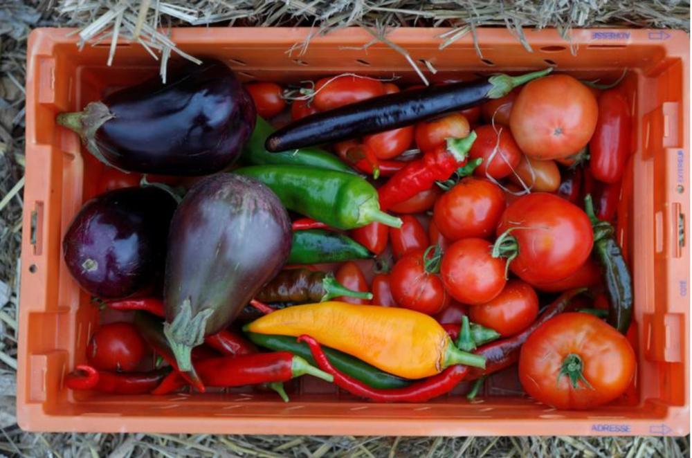Một thùng rau được trồng tại trang trại 900 mét vuông trên mái nhà bưu điện, một phần dự án của Facteur Graine, nhằm biến sân thượng thành phố thành các trang trại trồng rau, trái cây, cây hương liệu và cây thuốc.
