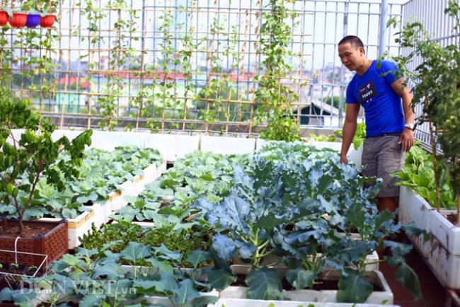 - Vườn rau sân thượng của đầu bếp khách sạn ở Hà Nội Bùi Minh Tuấn. Ngay khi xây nhà, anh đã thiết kế trải lưới thủy tinh quét lớp chống thấm sau đó lát gạch đỏ để bắt tay trồng rau lâu dài, ngăn việc thấm mái tầng thượng.