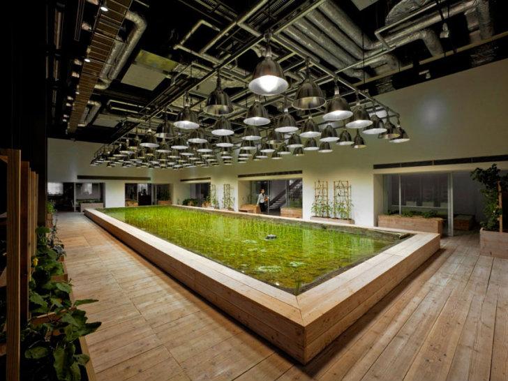 - Chưa hết, bên trong tòa nhà còn có các ruộng lúa truyền thống trong đất ngập nước và vườn rau vô cùng ấn tượng.