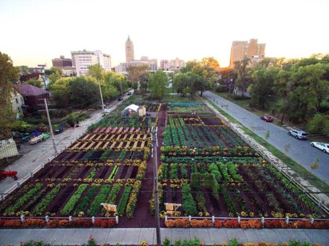 Trang trại tại Detroit nuôi sống 2.000 hộ gia đình miễn phí - Viện sáng tạo nông nghiệp đô thị Michigan (Mỹ) đã xây dựng một trang trại 12.000m2 tại Detroit nhằm cung cấp thực phẩm sạch cho những người dân khu vực xung quanh