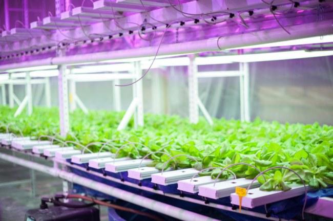 Trang trại trong nhà kho tại Indianapolis sử dụng 100% năng lượng tái tạo - Ở nhiều nơi trên thế giới, những nhà kho cũ kỹ đã được sửa đổi thành trang trại, Farm 360 tại Indiana, Mỹ, là một ví dụ.