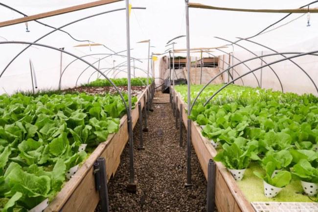 Trang trại nhỏ trên sân thượng tại Israel sản xuất 10.000 loại rau mỗi năm - Tòa nhà cổ kính nhất của Israel – Dizengoff – đã trở thành nơi ở của hàng nghìn loại thực vật với dự án trang trại sân thượng Green in the City.