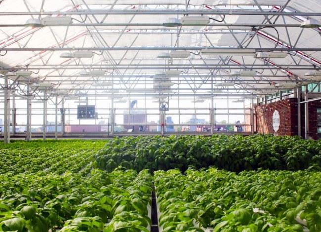 Trang trại mái nhà lớn nhất thế giới tại Chicago có thể trồng 10 triệu loại rau hàng năm - Chicago và Illinois là nơi có trang trại trên sân thượng lớn nhất thế giới.