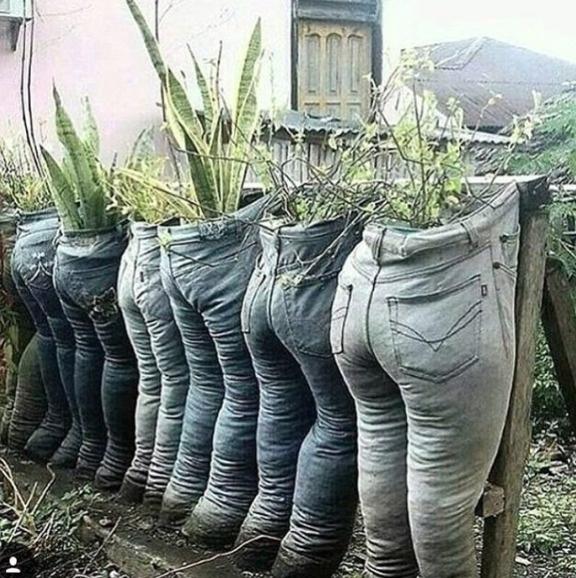 Việc tận dụng quần cũ là một ý tưởng hay, tuy nhiên những chậu cây này có vẻ hợp cho ngày Halloween hơn.
