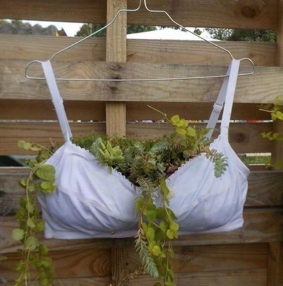 """Thoạt nhìn vào """"chậu cây"""" này, bạn có thể nghĩ đây là một ý tưởng tiết kiệm tuyệt vời nhưng sử dụng một chiếc áo lót có vẻ hơi quá đáng."""