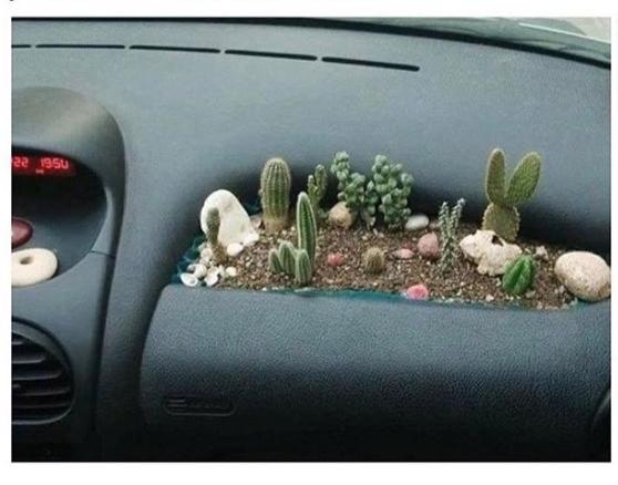 Sẽ không hành khách nào muốn ngồi trong chiếc xe có trồng xương rồng và tài xế phóng nhanh phanh gấp.