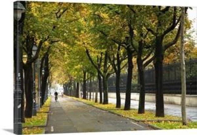 Ảnh: Một đoạn đường dành riêng cho xe đạp qua công viên