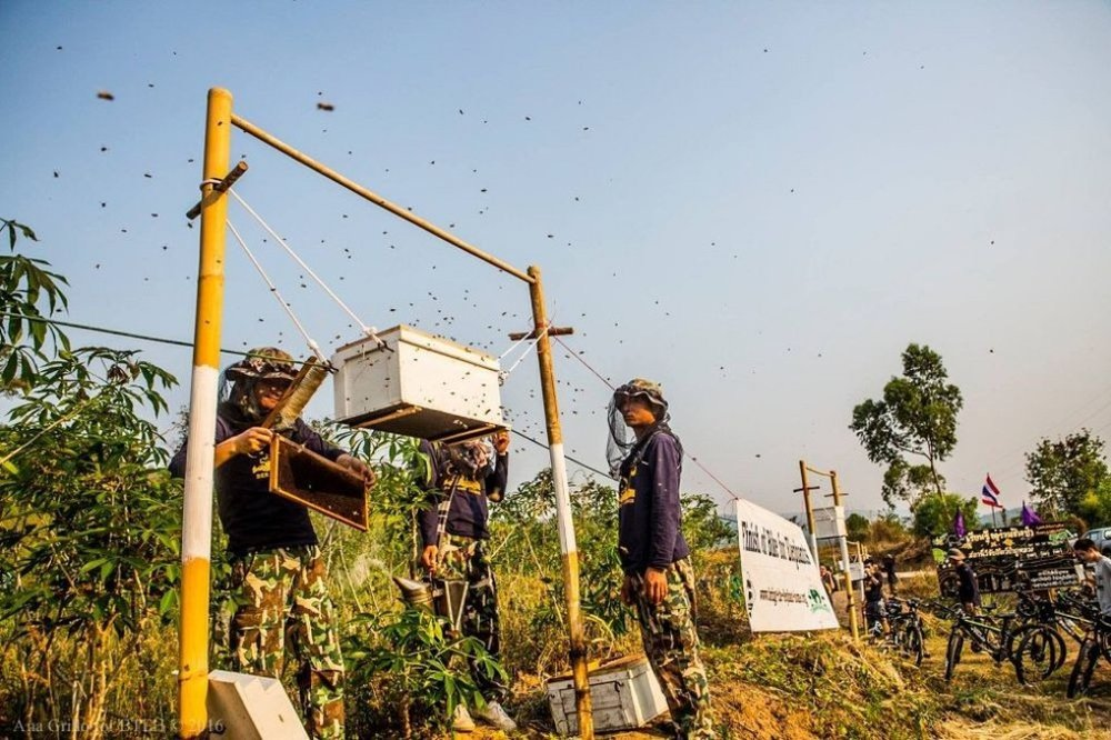 beehive-fence-12.jpg