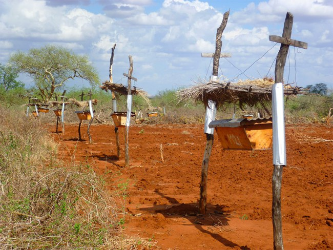 - Hàng rào của các nông trại được trang bị thêm các tổ ong treo dưới những mái che nhỏ. Mỗi tổ ong dặt cách nhau 10 mét và được nối với nhau bởi một sợi dây.